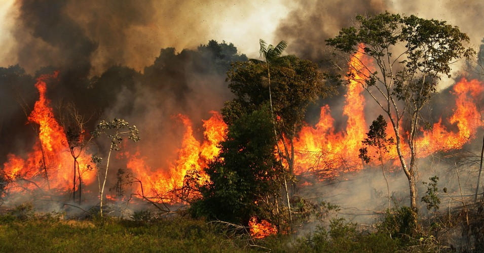 Amazon Rainforest Fire ( Fire On Amazon Forest)